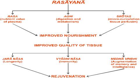 The rejuvenation channel of Rasayana effect