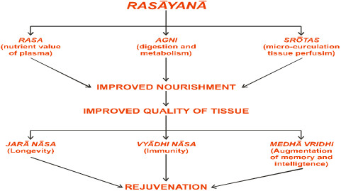 The rejuvenation channel of Rasayana effect